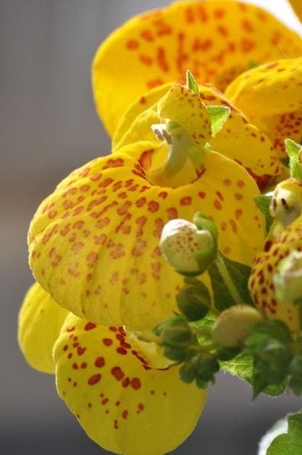 Pretty Flowers - Kind ??