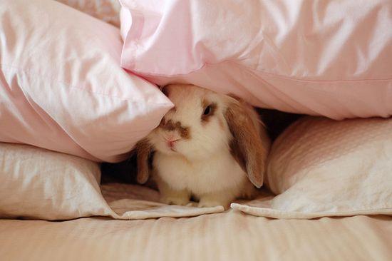 bunny !!