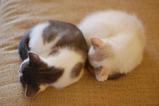 balls of kittens!