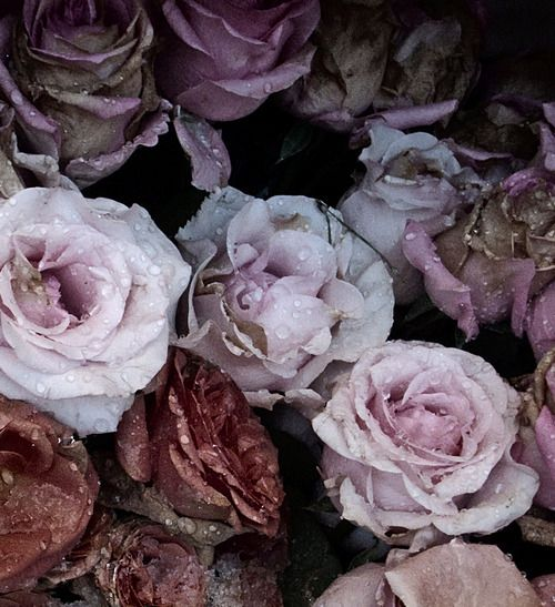 Gorgeous rainy roses: #purple #pink #white #roses