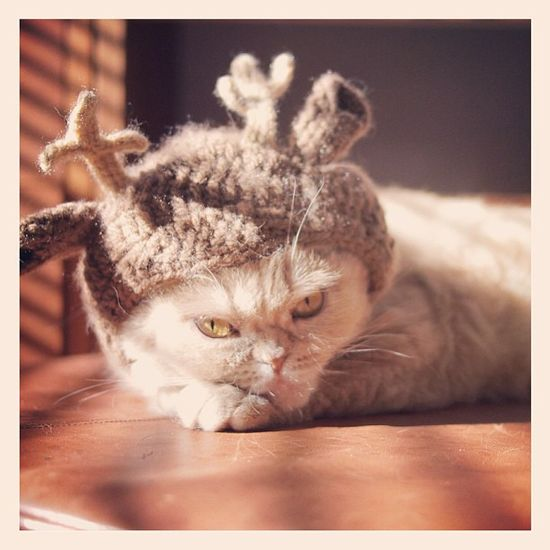 {kitty in an antler hat} this never gets old.