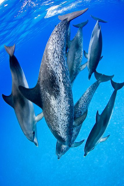 Dolphins Dance Troupe