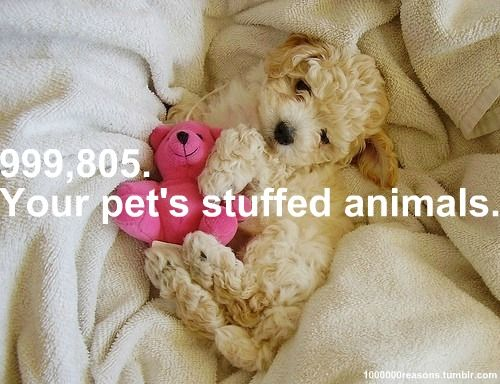 your pet's stuffed animals