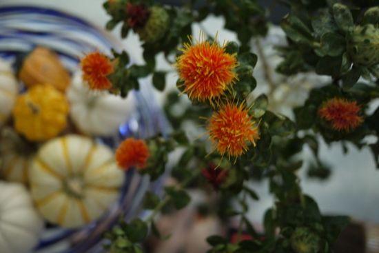 Safflowers flower arrangement and mini-gourds in a bowl