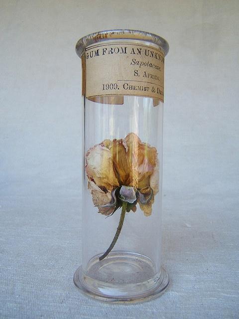 1909 flower specimen