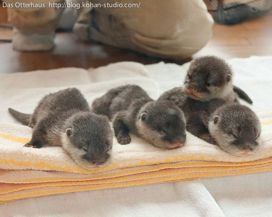 Baby otters. !!!!