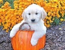 #HalloweenAnimals #Halloween #Fun #Cute #Pets