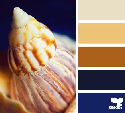shelled hues