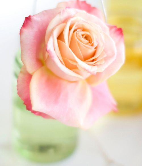 Rose #Flowers