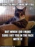animal memes - Bing Images