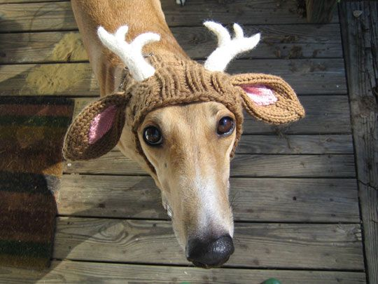 crochet dog hat. Poor dog, but it is really funny!
