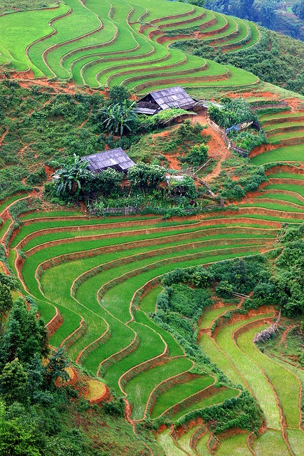 Farms and Terraced Rice in Sapa, Vietnam by Rob Kroenert