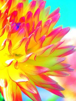 bright color flower