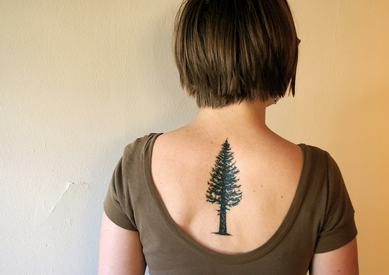 Beautiful doug fir tattoo (clearly not modeled after the Oregon license plate, as mine was)