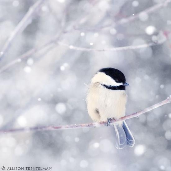 perfect little chickadee