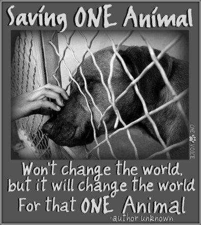 When you save an animal...