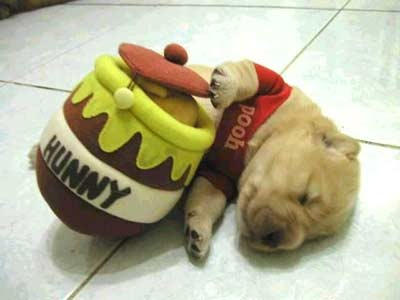 Looks like Pooh ate too much hunny.