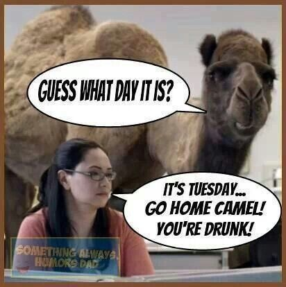It's Tuesday Go Home Camel