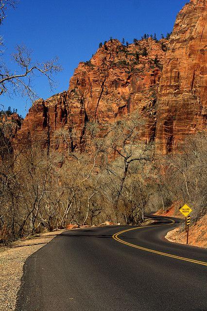 Road into Zion, Utah