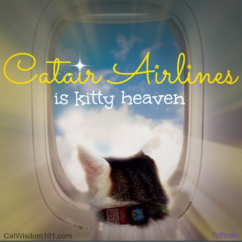 Click ahead to read tips for safe flying with your pets from our new guest blogger, Layla Morgan-Wilde from Cat Wisdom 101!
