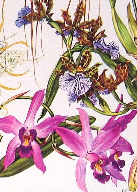Vintage botanical prints.