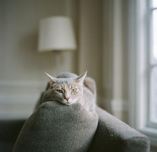 monochrome kitteh