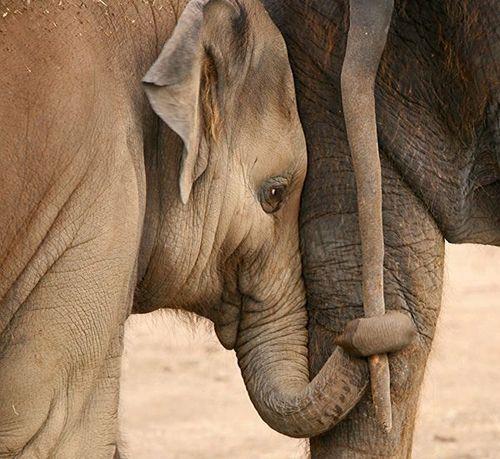 Elephant hand holding.