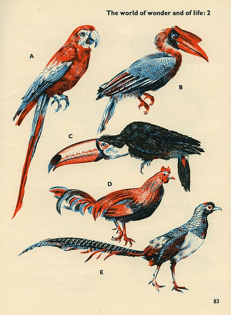 Birds, Illustration by Stanley Smith from 'The Gilbert Harding Question Book' devised by W. H. Mason, published 1956.