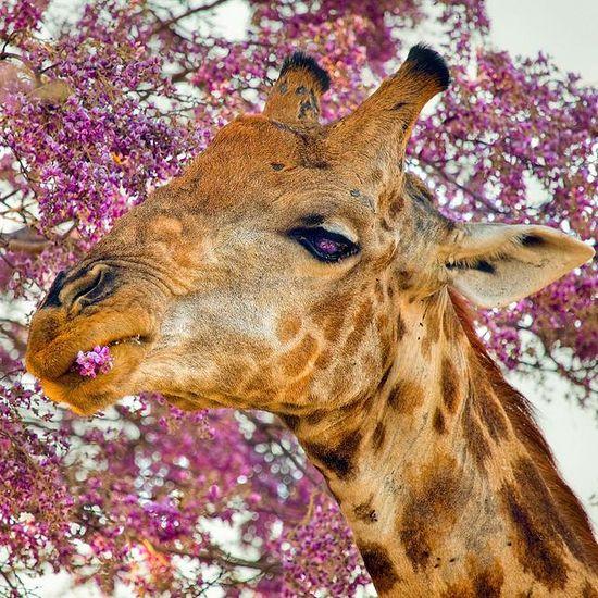 By Skip #wild #animals