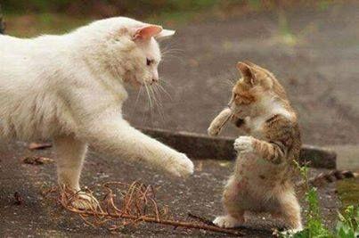 Cute cat!  haha  #lol