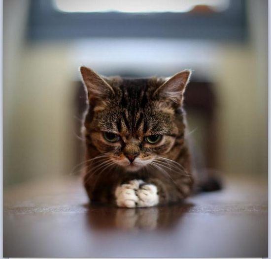 Kitty plotting something!