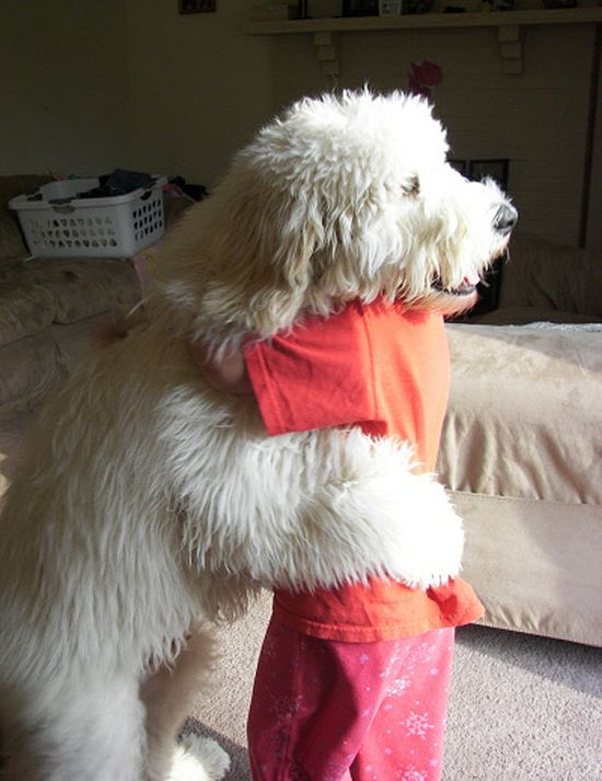 giant dog hug