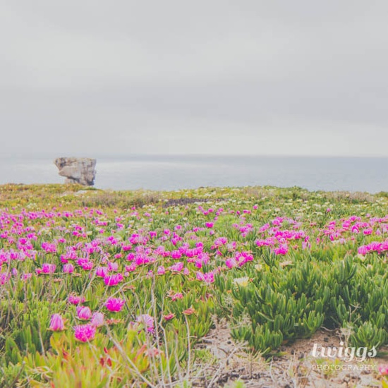 Across the Flowers to the Ocean 10x10 Original Fine Art Print - Landscape, Nature Photography, Seaside, Pink Flower Photography, Wall Decor
