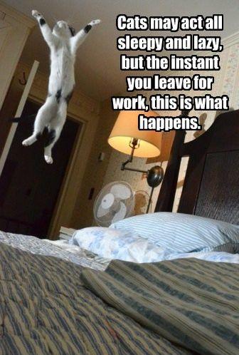 Cats - Google+