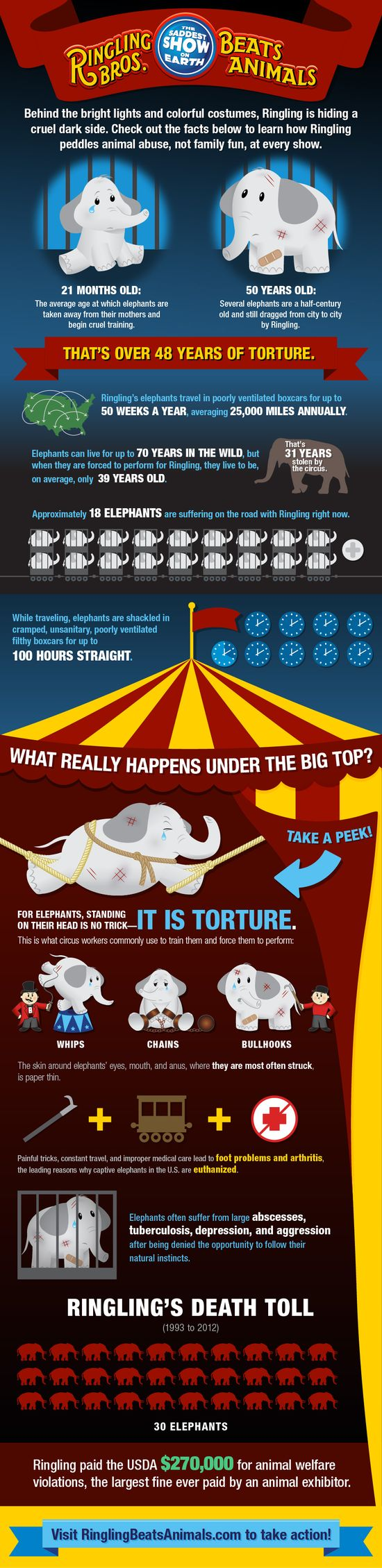 Behind the bright lights and colorful costumes, the Ringling Bros. circus is hiding a cruel, dark truth. Ringling doesn't want you to know what really happens to the animals who are forced to perform in its acts, but this infographic exposes some of the circus's abuses. #infographic #ringling #animalabuse #circus #elephants #animalrights #ringling