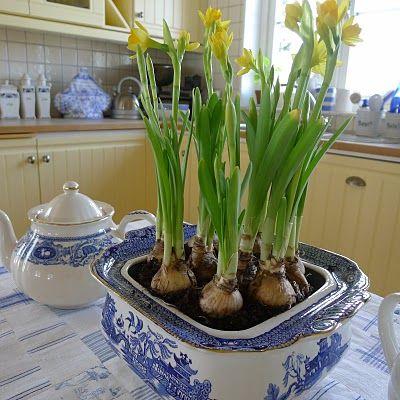 daffodils in blue and white china - so pretty