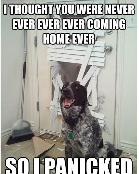 Funny Dog!