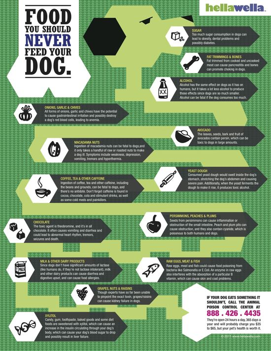 #Infographic: #Foods You Should Never Feed Your #Dog