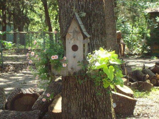 Bird House Pleasure