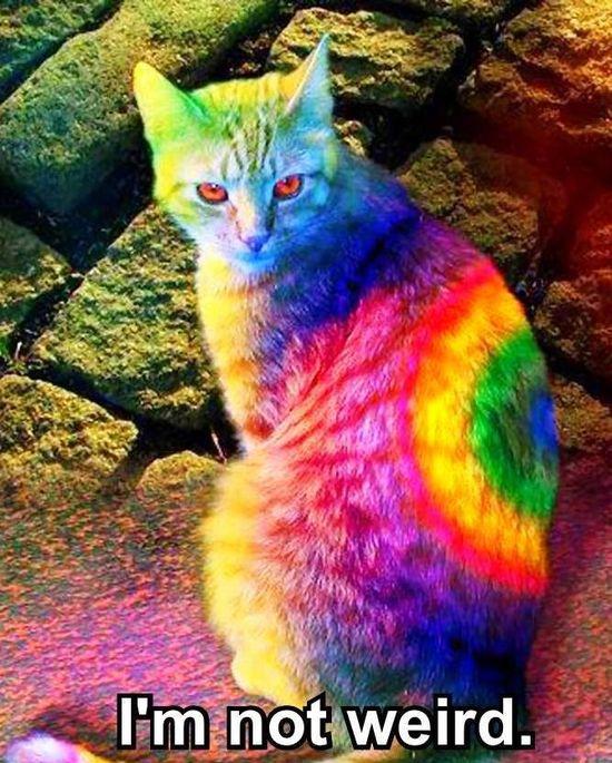 #rainbow #kitty #cat #cute #funny #cat