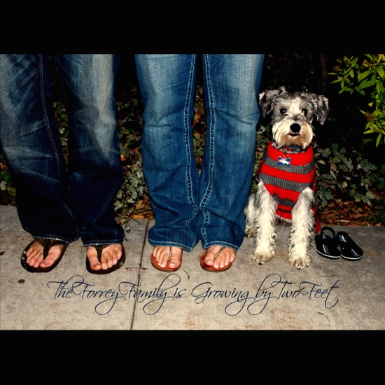 Baby Announcement with the family dog!