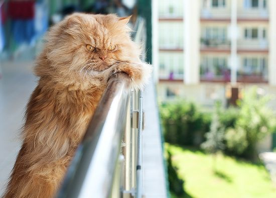 where's that stupid Grumpy Cat...i'm grumpier than he is......