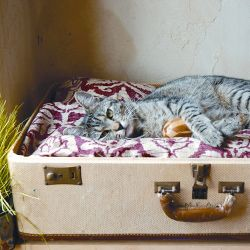 This pet bed uses the better half of a junk-store suitcase whose days on the luggage carousel are long gone.
