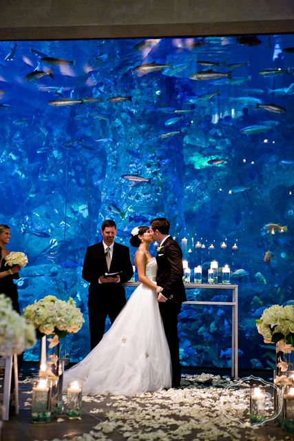 A Wedding at the Seattle Aquarium. Great idea!!!!