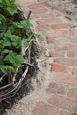 Old brick pathway.