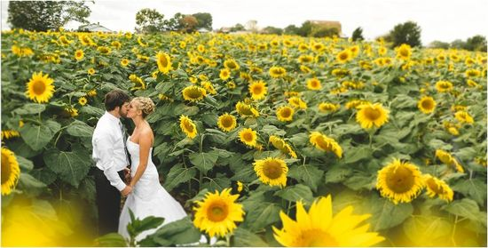 Sunflower field wedding photo! // Photo by JoPhoto