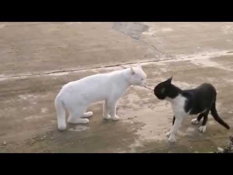 funny cats,funny animals,funny video,funny videos - funny cats videos - videos.airgin.org...