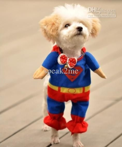 Superdog!! He so looks like he's about to fly off and save the world.