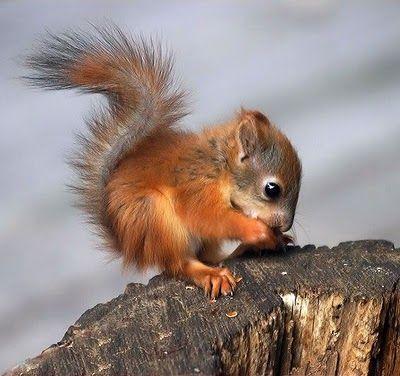 Baby squirrel. Enough said.