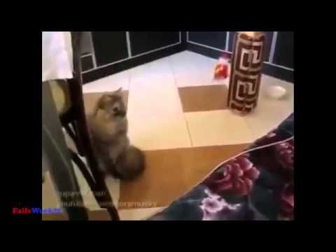 Funny Cat Fails TOTAL YEARS